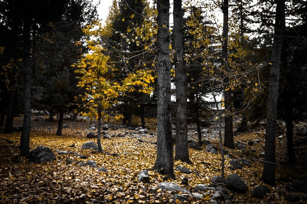 Autumn Colors in Naran